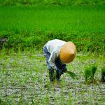 農業を目指す若者が増加!?過疎地での農家高齢化とのレース開始