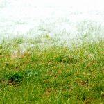雑草処理の対応方法で重要なポイントは「種」と「根」