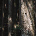 自伐型林業を兼業にするメリットは安定収入と安全資産
